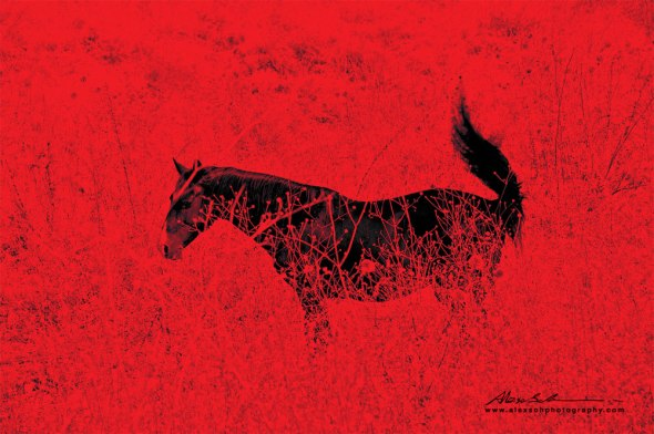 Red_Horse